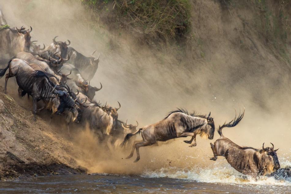 Fotosafari nel regno degli animali in Tanzania.