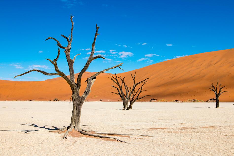 LA VITA NEL DESERTO PIÚ ANTICO DEL PIANETA: IL NAMIB.