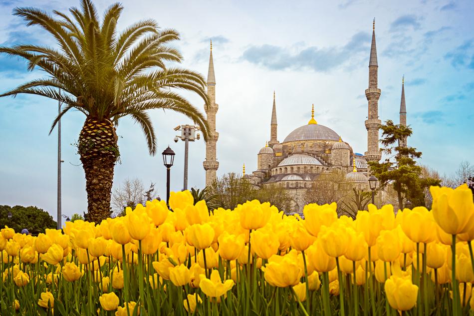 ISTANBUL IN FIORE