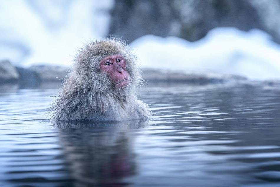 Guida pratica alla millenaria tradizione del bagno termale in Giappone.