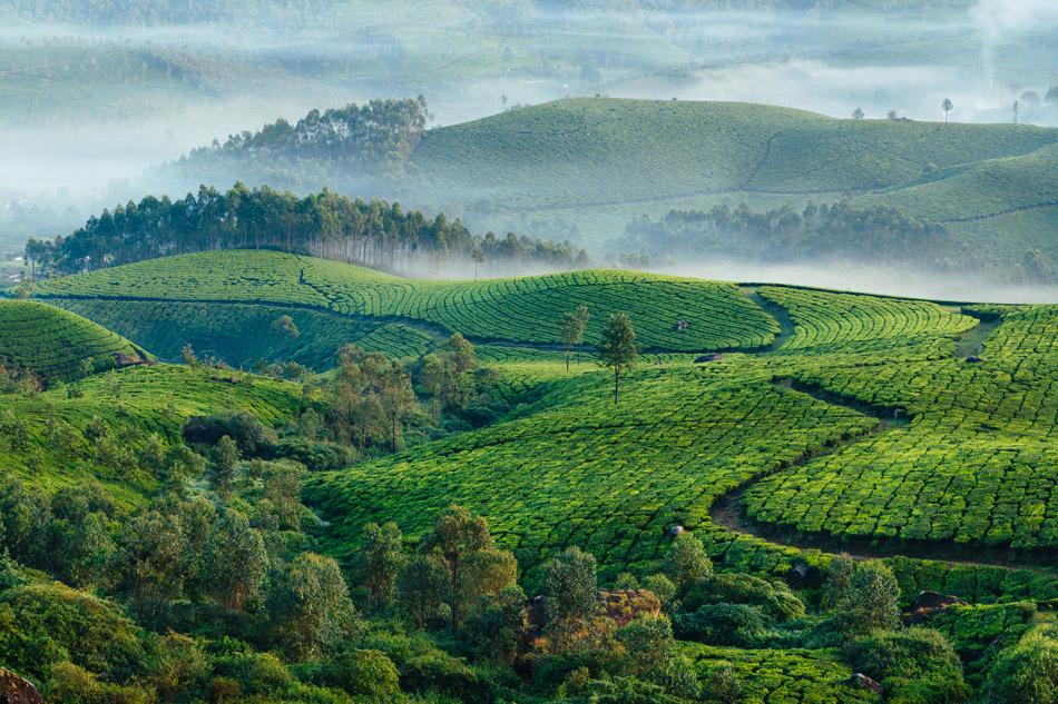 In Kerala per una dolce evasione di benessere che profuma di spezie.